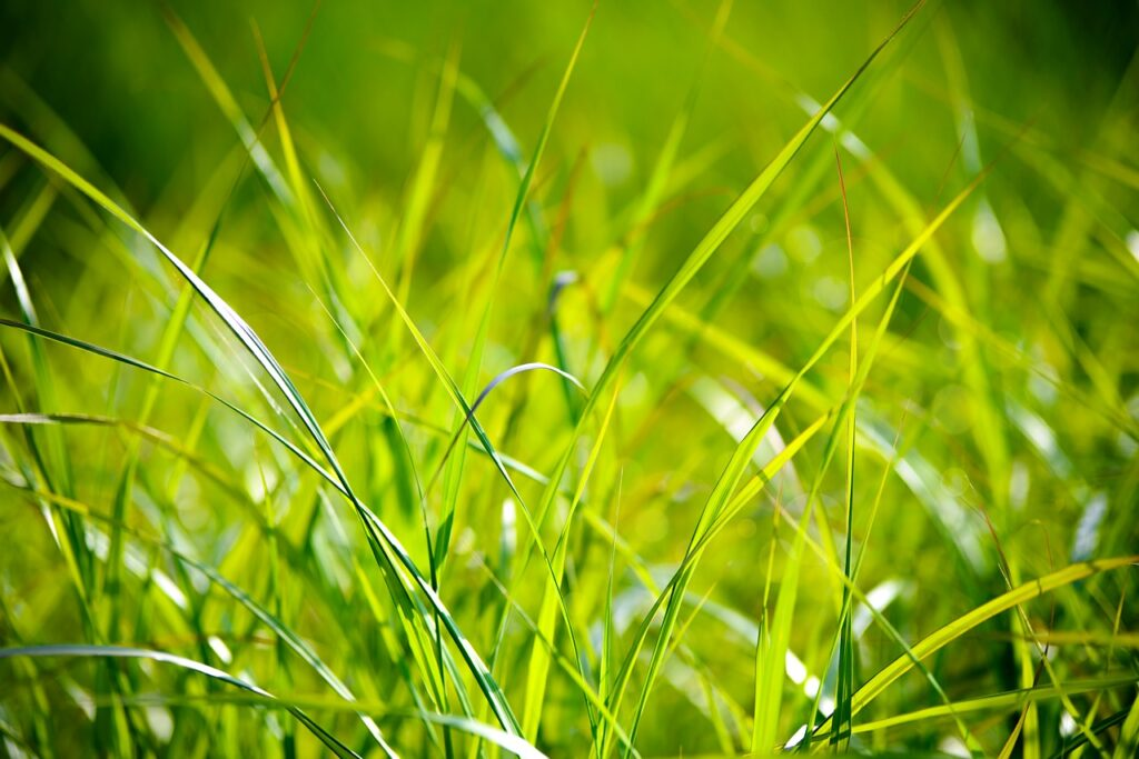 画像に alt 属性が指定されていません。ファイル名: grass-1550025_1280-1024x683.jpg